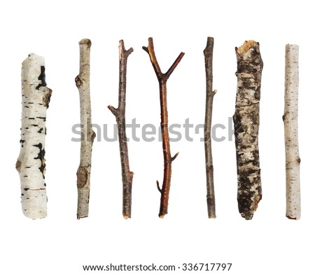 Twigs, set macro dry branches birch isolated on white background,  with clipping path Royalty-Free Stock Photo #336717797