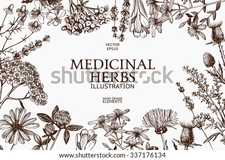 Vector design with hand drawn herbs. Decorative background with vintage medicinal herbs sketch. Royalty-Free Stock Photo #337176134