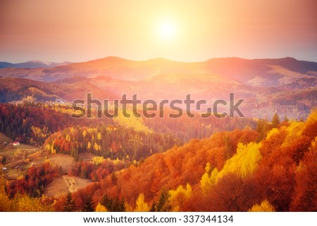 Majestic tree with sunny beams at mountain valley. Dramatic morning scene. Red and yellow leaves. Retro filter and vintage style. Instagram toning effect. Carpathians, Ukraine, Europe. Beauty world. #337344134