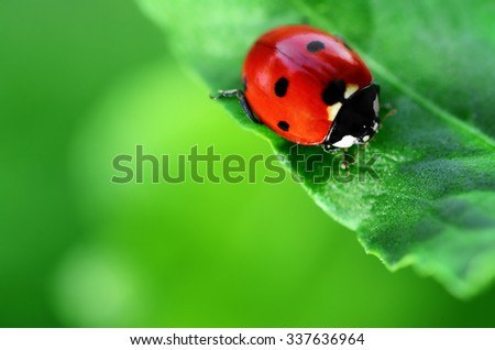 Ladybug on green leaf defocused background Royalty-Free Stock Photo #337636964