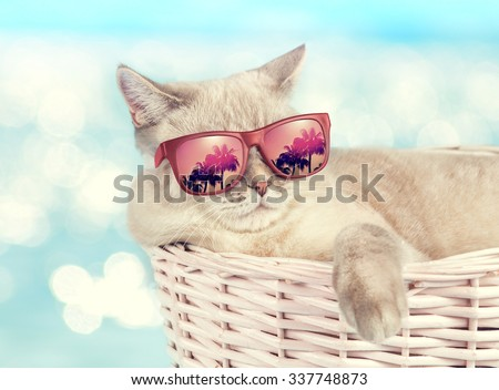 Cat wearing sunglasses relaxing in the basket against sea background