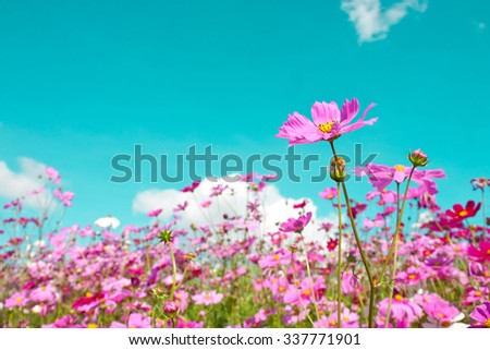 cosmos flowers in retro background , vintage tone