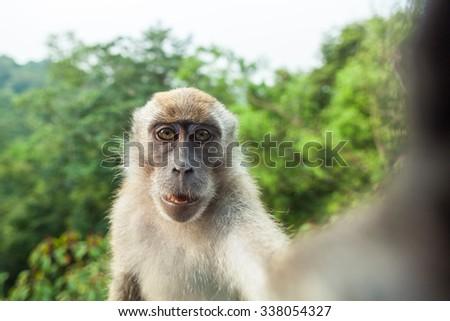 Macaque's Selfie #338054327