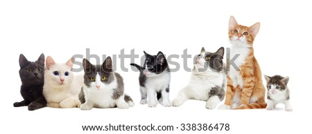 cat  looks, isolated on white background  #338386478