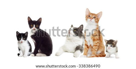 cat  looks, isolated on white background  #338386490