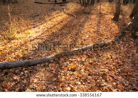 Fallen Leaves #338556167