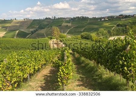 Summer landscape in Oltrepo Pavese (Pavia, Lombardy, Italy) at summer (August) with vineyards #338832506