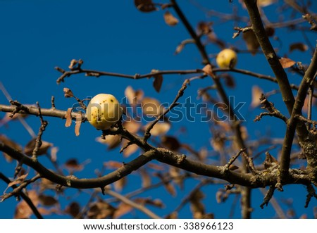 Autumn apple-tree on background of blue sky #338966123
