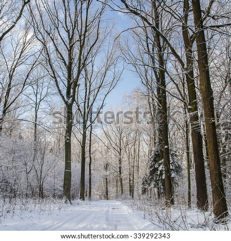 Forest in winter #339292343