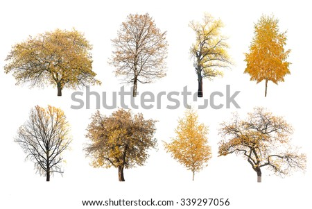 autumn trees isolated on white background  #339297056