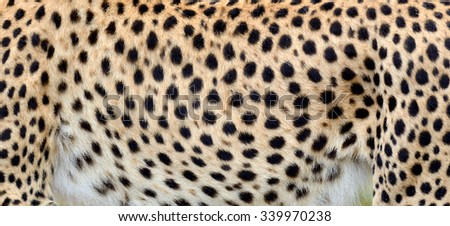 Close-up view of the real skin of a cheetah