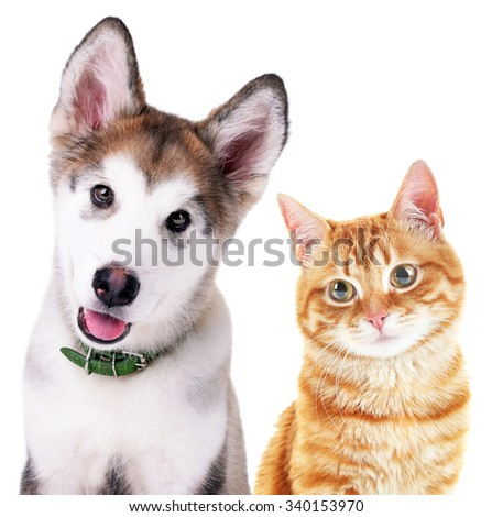 Cute cat and dog isolated on white #340153970