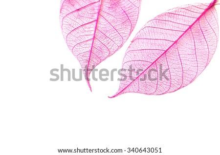Skeleton leaves isolated. Leaf veins, Leaf skeleton silhouette #340643051