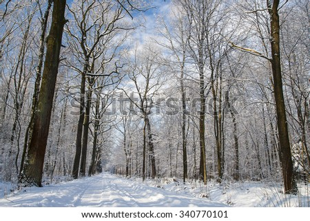 Forest in winter #340770101