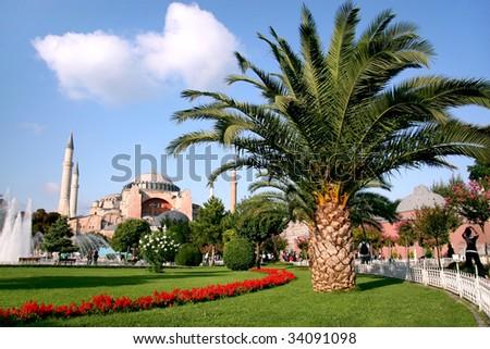 Palm tree on Sultanahmet garden #34091098