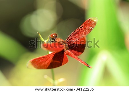 dragonfly #34122235