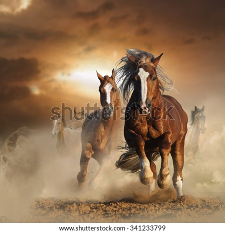 Two wild chestnut horses running together in dust, front view #341233799