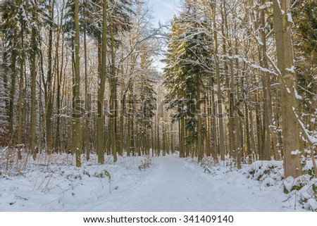 snowy forest in the Harz Mountains of Germany #341409140
