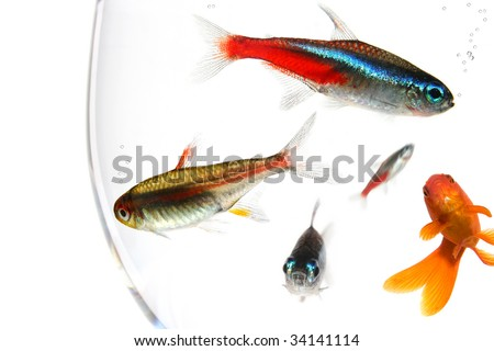 many fishes in a too small bowl #34141114