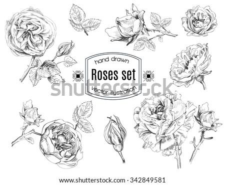 Rose flowers set in sketch stile. Vector illustration