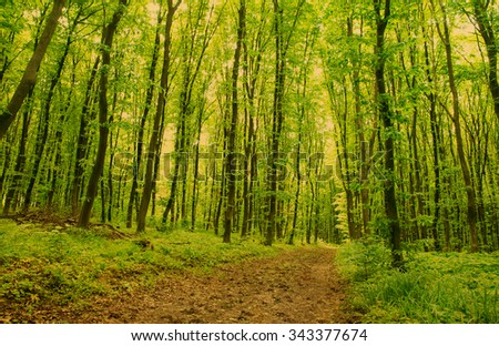 Forest background #343377674