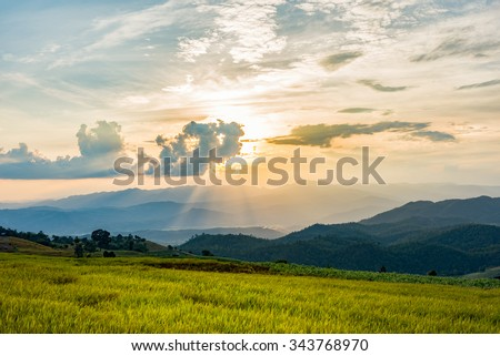 Rice fields with sunset at Ban Pa Bong Piang,Mae Cham, Chiang Mai, The most beautiful rice terrace in Thailand #343768970
