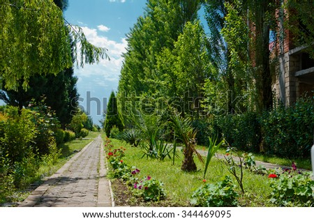 Forest road #344469095