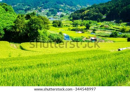 Tanada(rice field),nara(prefectures),tourism of japan #344548997