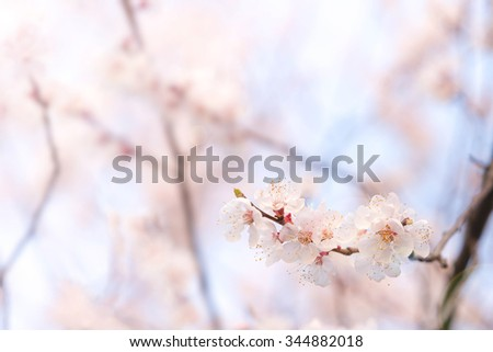 abstract cherry blossom [Soft focus, Background] #344882018