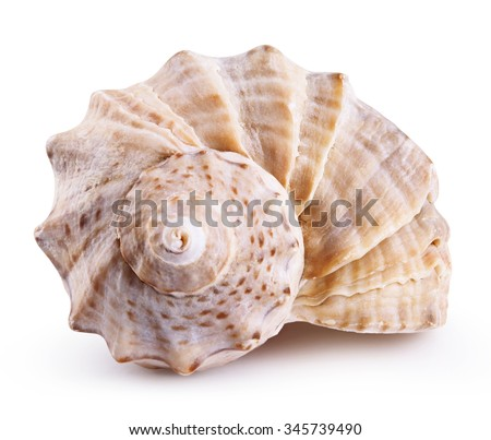 Sea shell isolated on a white background. Clipping Path Royalty-Free Stock Photo #345739490
