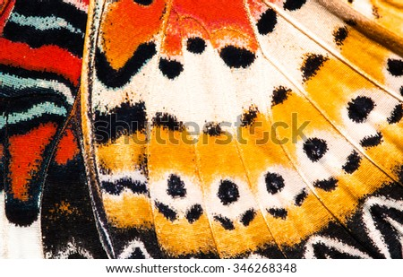 Leopard lacewing butterfly wing texture background Royalty-Free Stock Photo #346268348