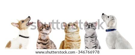 Cute pets isolated on white #346766978