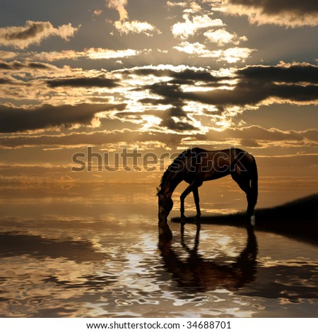 The horse at lake on sunset #34688701