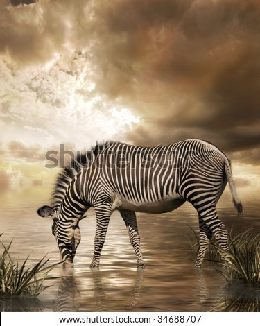 Zebra in water on cloudy sky background #34688707