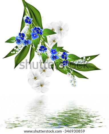 Violet flowers isolated on white background #346930859