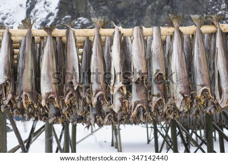 Row of dried cod fish hung outside. Northern Norway. #347142440