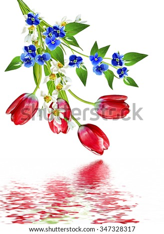 spring flowers tulips isolated on white background #347328317
