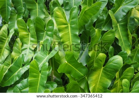 The beauty of the green natural charm and passion of leaves. Obtained from nature around us and around the world. #347365412