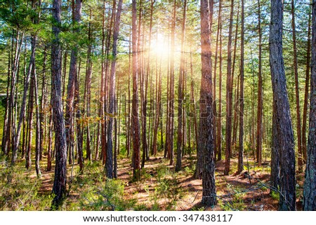 autumn forest trees. nature green wood sunlight backgrounds. #347438117