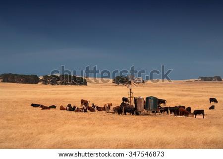 rural scene in South Australia, Australia #347546873