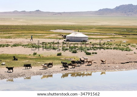 Traditional mongolian landscape. Herd of goats on the  lake bank #34791562