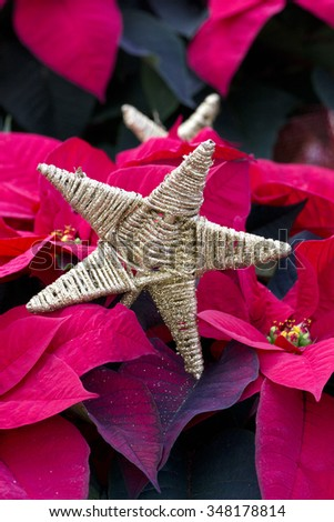 Gold Star and Red Christmas Poinsettia #348178814