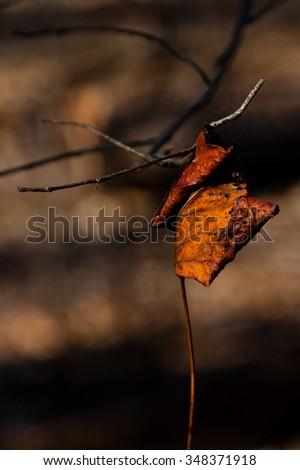 Daytime scene of leaves during the autumn season  #348371918