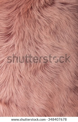 Close up of a pink dyed sheepskin rug as a background  #348407678