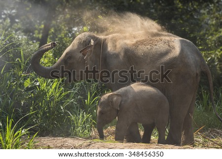 Elephant mother with baby playing joyful in