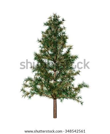 Fir-tree #348542561