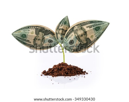 US or American currency note or Dollar growing on plant, business growth concept #349330430