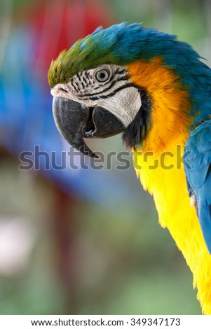 Blue-and-yellow Macaw  #349347173