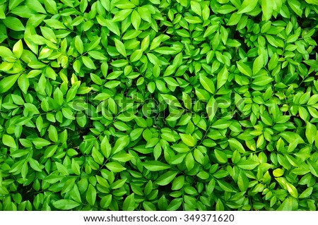 green leaf Royalty-Free Stock Photo #349371620