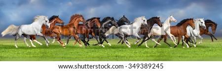 Herd of horses on summer pasture, banner for website